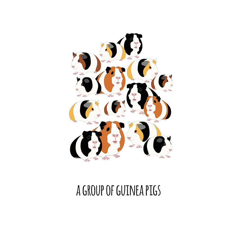 RP - A Group of Guinea Pigs Art Print