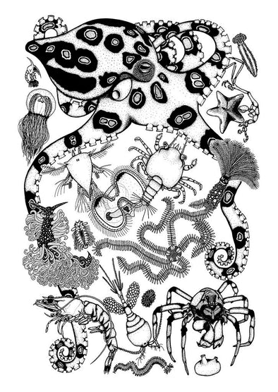 Marine invertebrates profiles A3 print By Rebecca Robinson