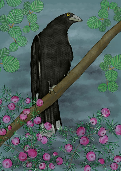 Pink Mountain Berry Currawong Print