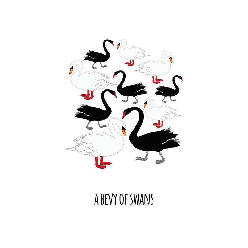 RP - A Bevy of Swans Art Print
