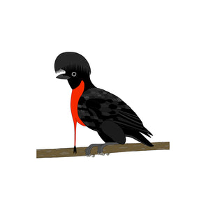 A-Z Umbrellabird Art Print