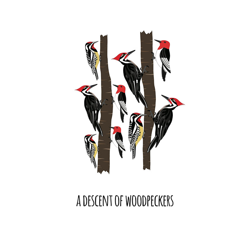 RP - A Descent of Woodpeckers Art Print