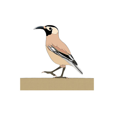 A-Z Xinjiang Ground Jay Art Print