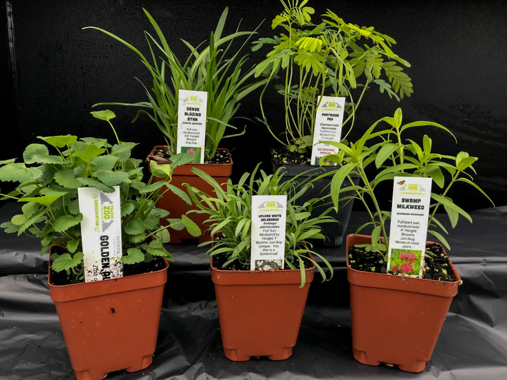Migratory Monarch Plant Package