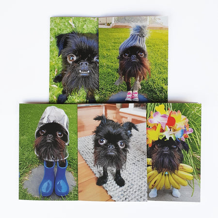 Greeting Cards - 5 pack