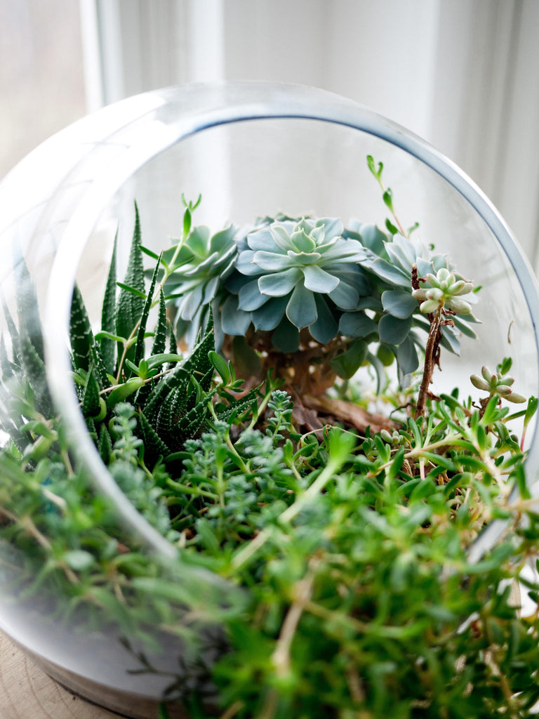 What is a Terrarium False Bottom?