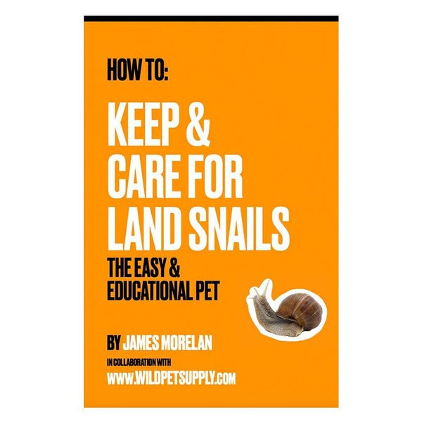 Bulimulus Land Snail Pack of 3 - Wild Pet Supply