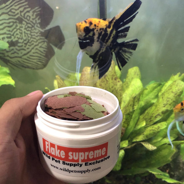 Flake Supreme Floating Fish Food - Wild Pet Supply