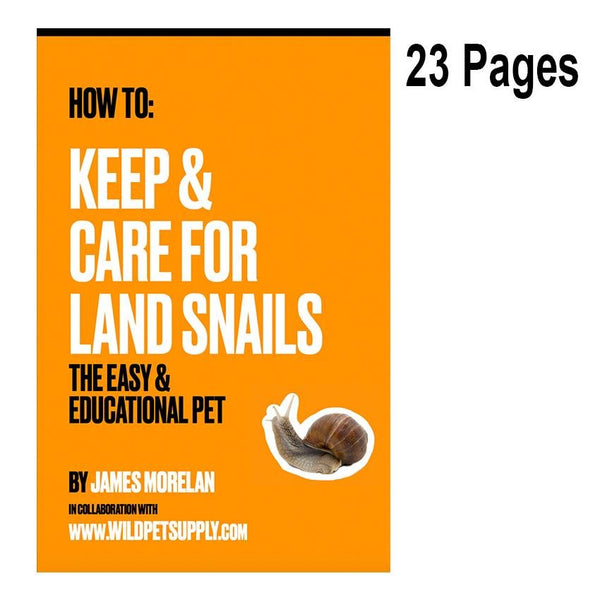 How To: Keep & Care for Land Snails | The Easy & Educational Pet - Wild Pet Supply