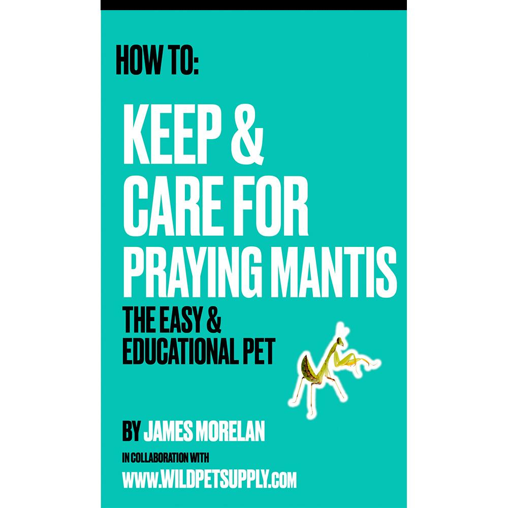 How To: Keep & Care for Praying Mantis | The Easy & Educational Pet - Wild Pet Supply