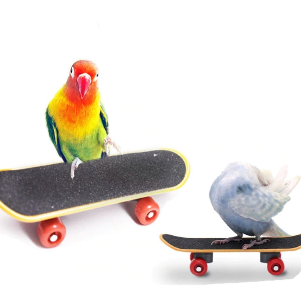 Parrot Training Skate Board Toy - Wild Pet Supply