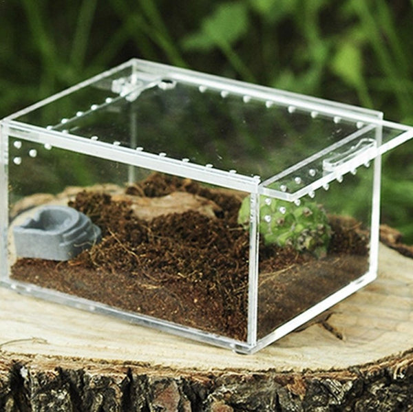 Reptile Insect Box Small - Wild Pet Supply
