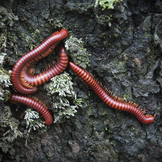 Scarlet Millipedes Pack Of 2 - Wild Pet Supply