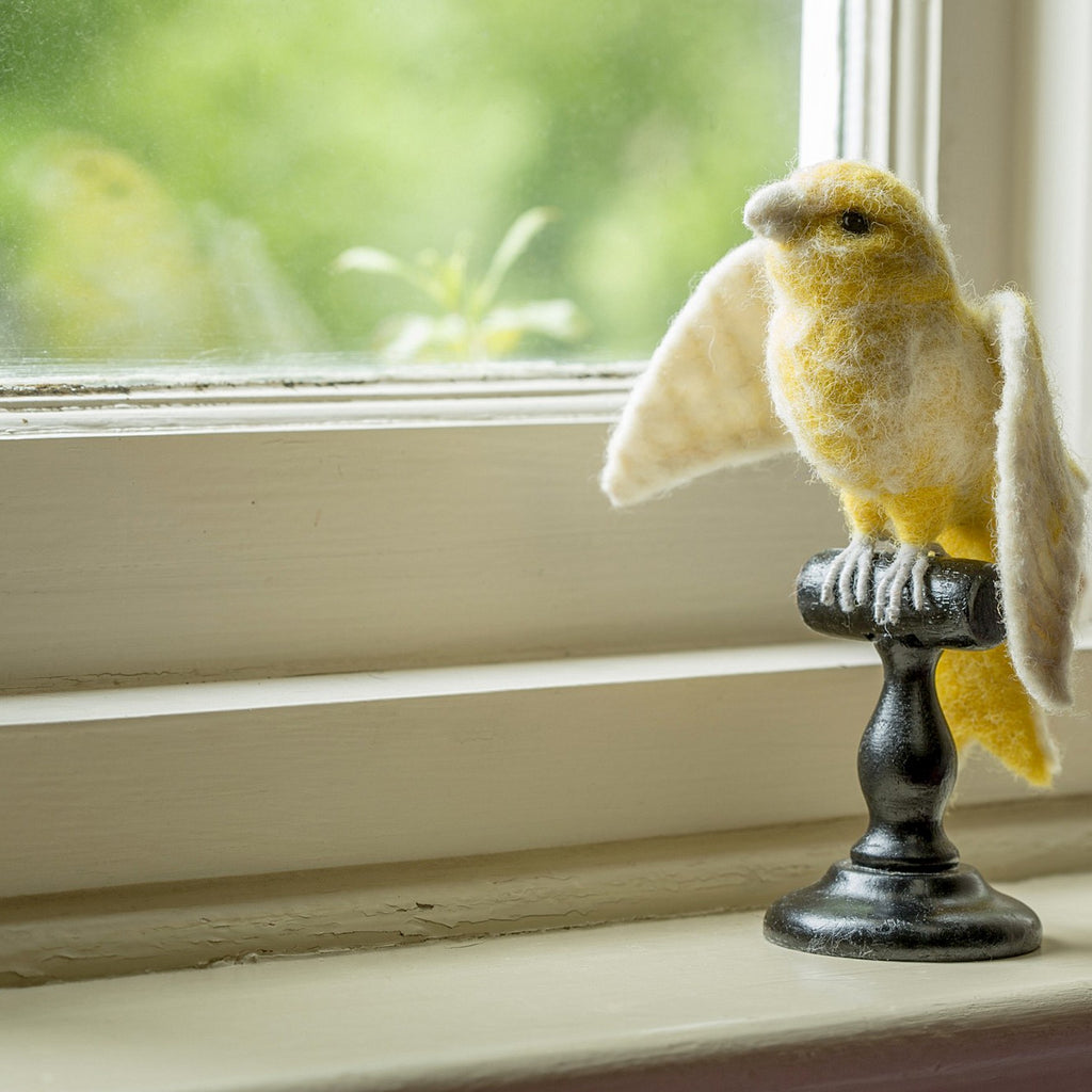Yellow Norwich Canary Taxidermy
