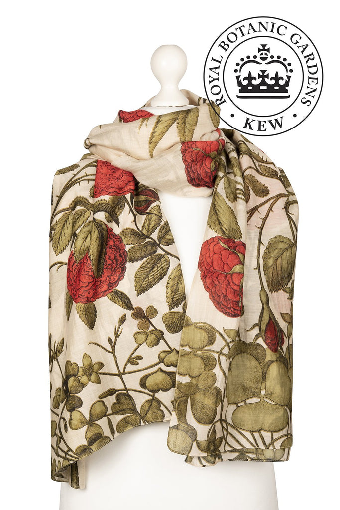 One Hundred Stars & Kew Gardens Rose Bush Red Scarf