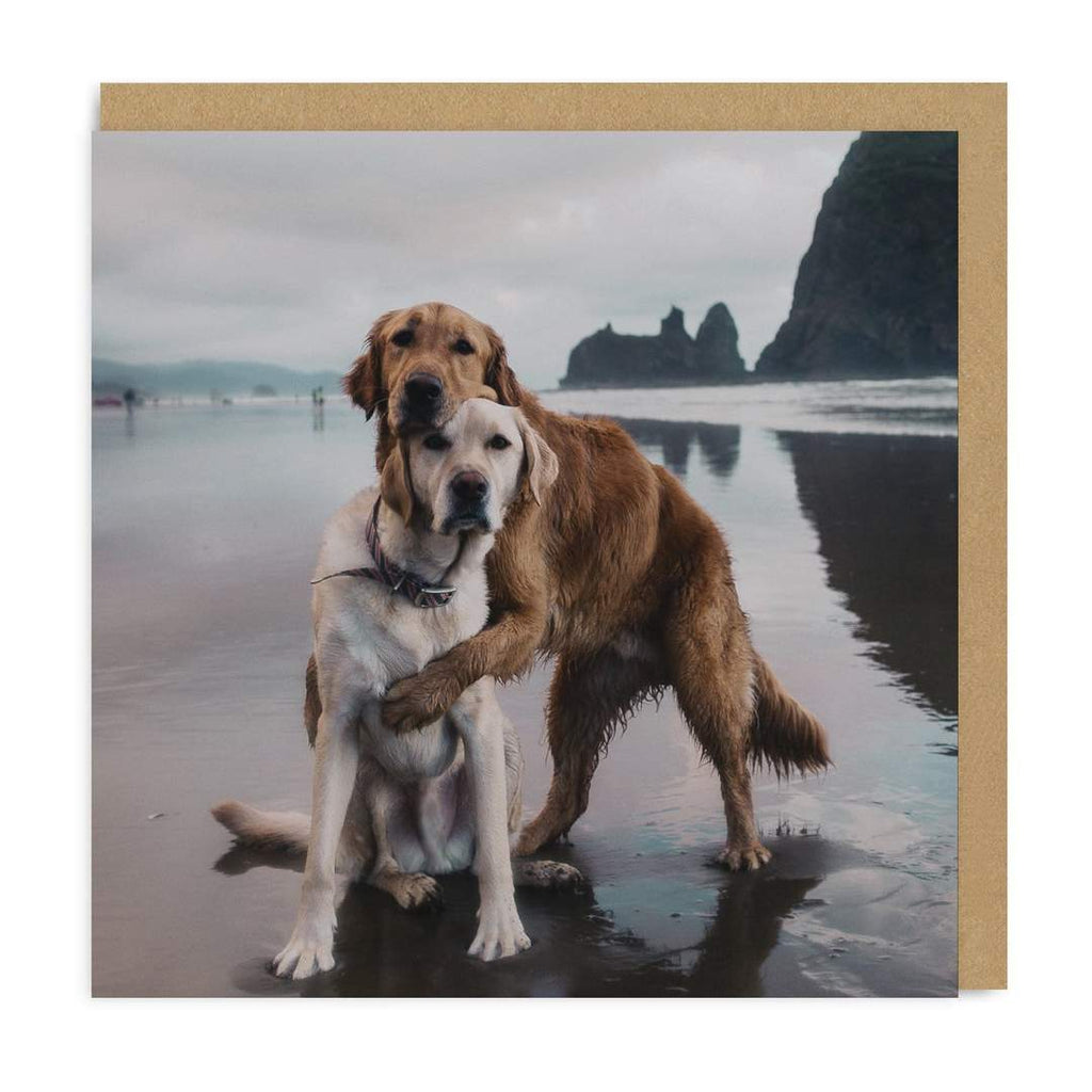 Card Beach Dogs