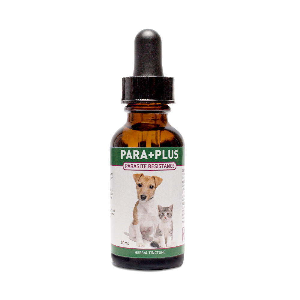 Para+Plus is an herbal tincture for dogs and cats with yeast, worms or bad bacteria. It has natural anti-bacterial, anti-fungal and anti-parasitic properties, also for prevention. OnTotalWellness distributing for Ontario