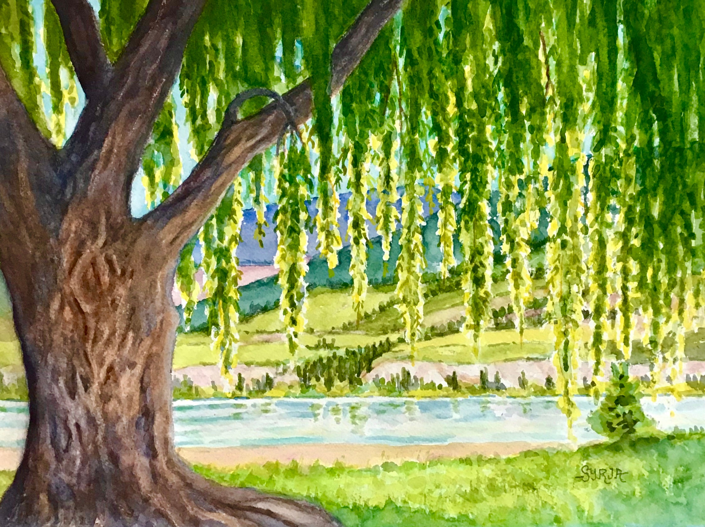 Powell Beach Weeping Willow - Framed watercolour - $395