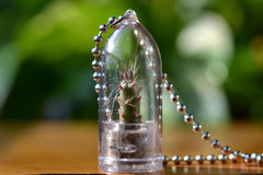 Vampire Cactus Plant Necklace - WearItMiniPlants  - 1