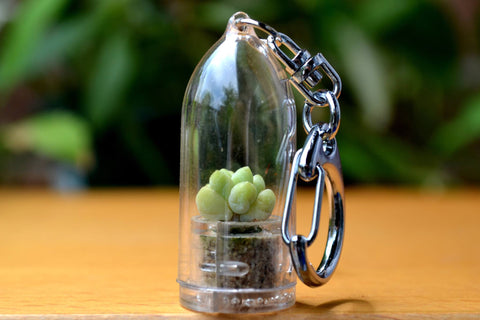 Baby Donkey Tail Succulent Keychain