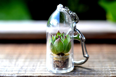 Hens 'n' Chicks Succulent Plant Keychain