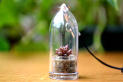 Little Gemstone Succulent Charm Strap - WearItMiniPlants  - 1