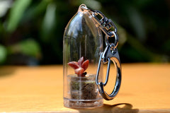 Sunrise Succulent Keychain - WearItMiniPlants  - 1