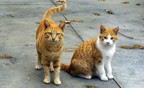 4 Reasons to Celebrate National Feral Cat Day