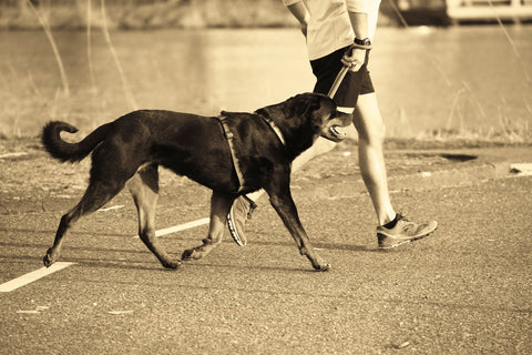 Exercising Your Animal: The Mutual Benefits