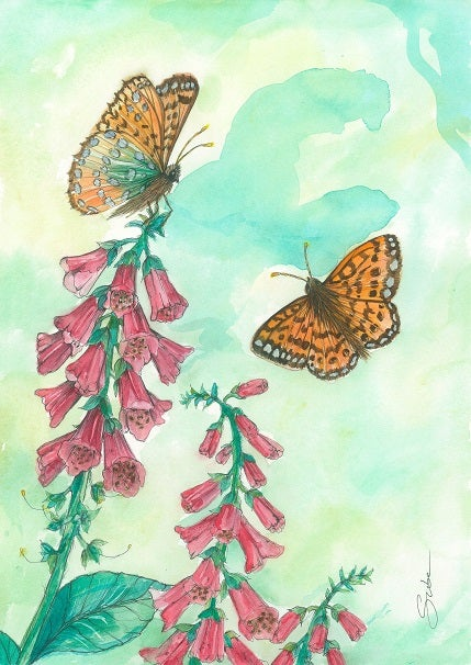 Suba Irish Watercolour Print 'Foxglove & Green Fritillary'