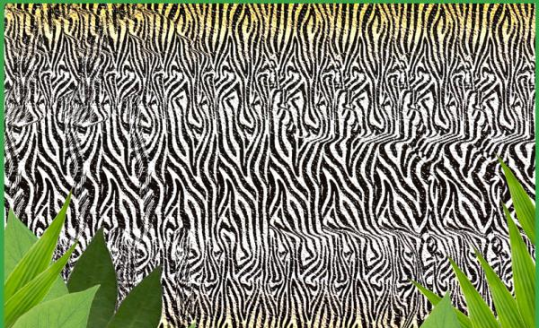 Zebra Magic Eye