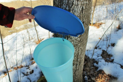 Ultimate Maple Tapping Kit - Buckets & Spiles
