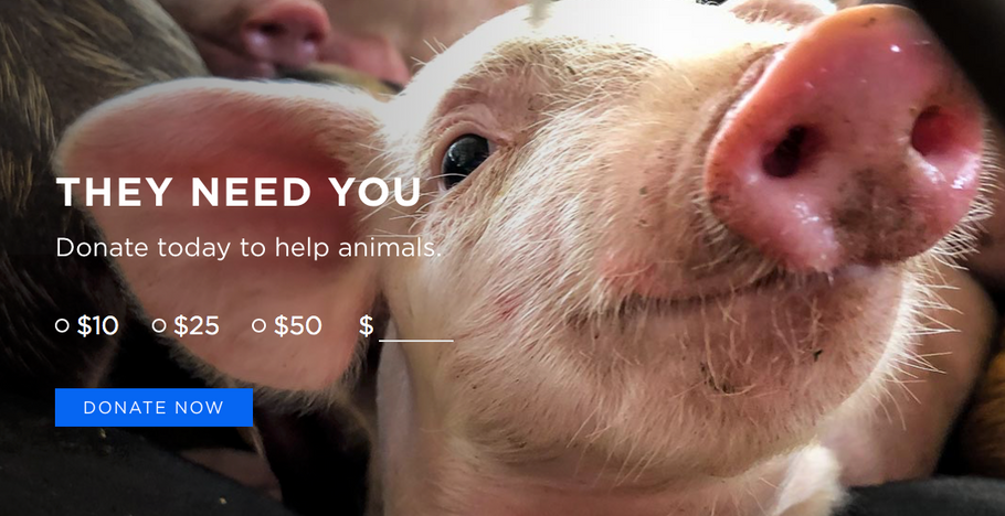Mercy For Animals Organization | Donate Now