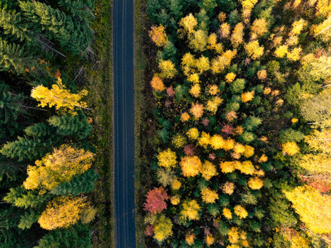 Forest and road photo from a drone