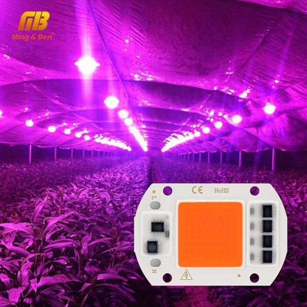 LED Grow COB Chip Phyto Lamp,Light & Lighting,Uunoshopping