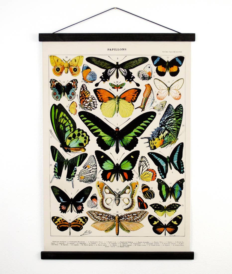 Curious Prints 18 x 24 French Butterfly