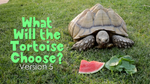 What Will the Tortoise Choose - Version 5