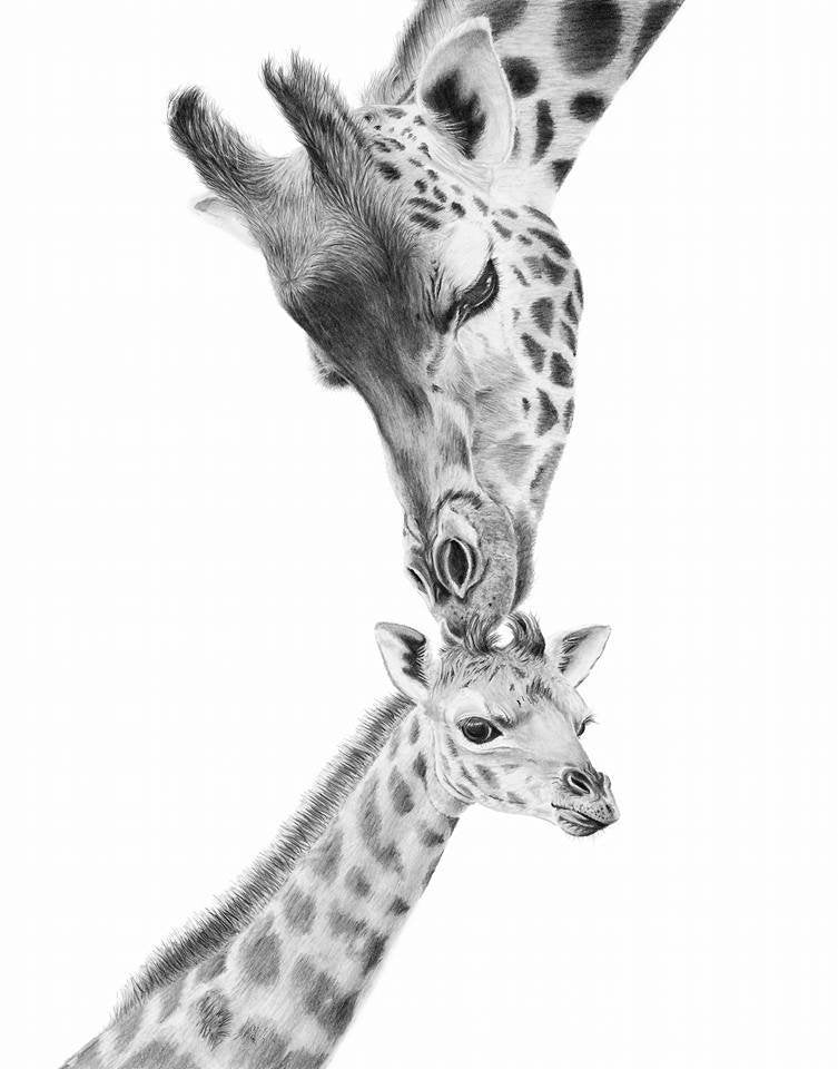giraffe baby print, mother and baby giraffe, African wildlife wall art giclee print