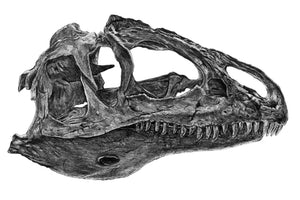 Dinosaur skull print, graphite pencil fossil wall art, allosaurus bone print