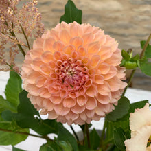 Load image into Gallery viewer, 25/09/20 Tess's dahlias and soft summer / autumn tones.