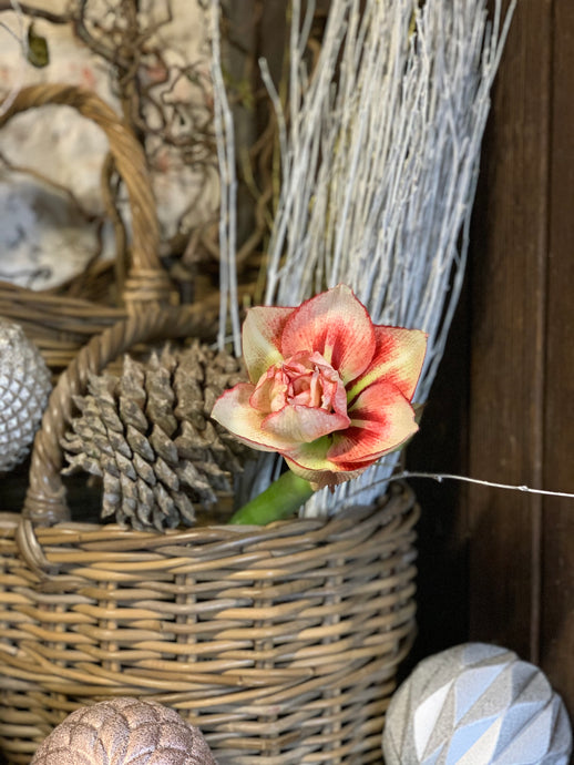 27/11/20  Simply amaryllis, wax flower and eucalyptus
