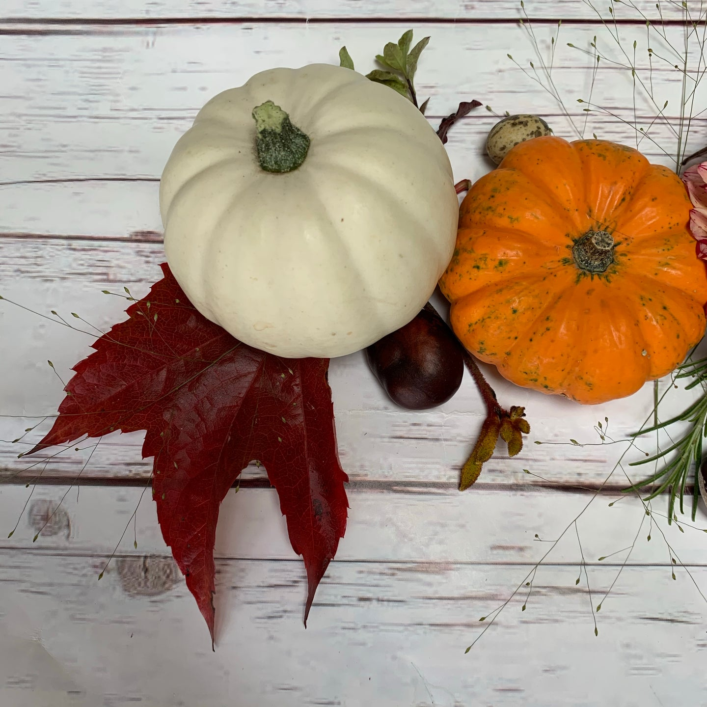 Decorative gourd and mini pumpkin collection