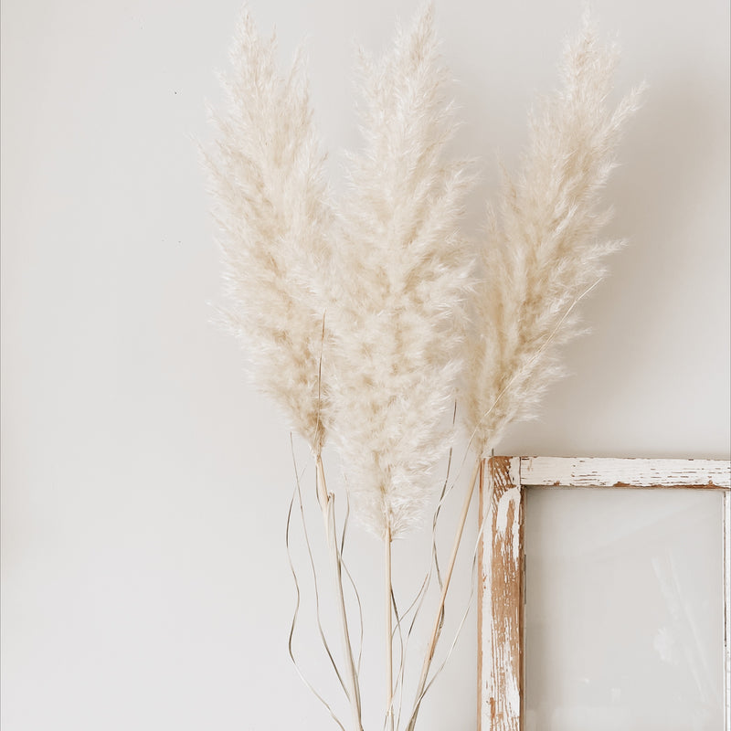 Cream Pampas Grass Bouquet Large
