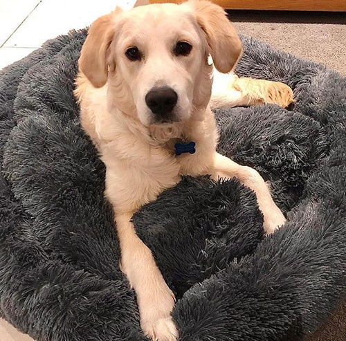 Plush Calming Dog Bed