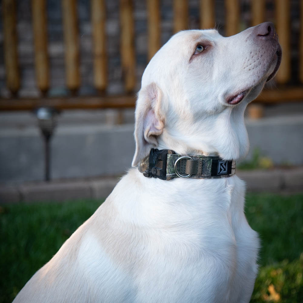 The KODA Collar