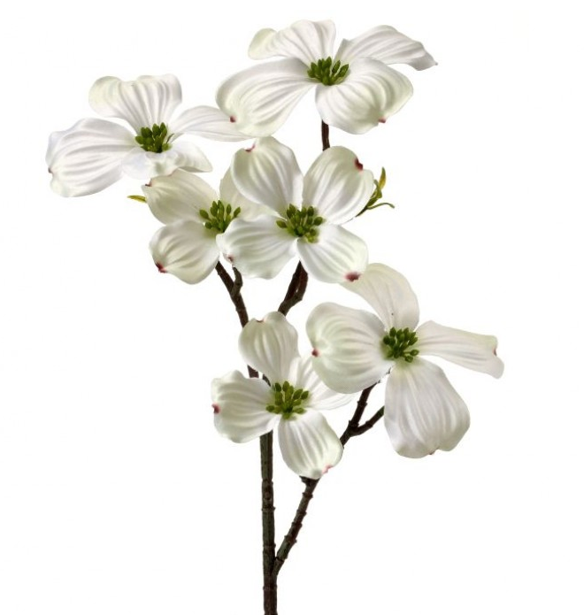 Dogwood Stem White