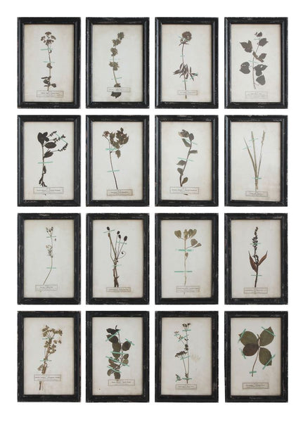 Vintage Reproduction Botanical Print