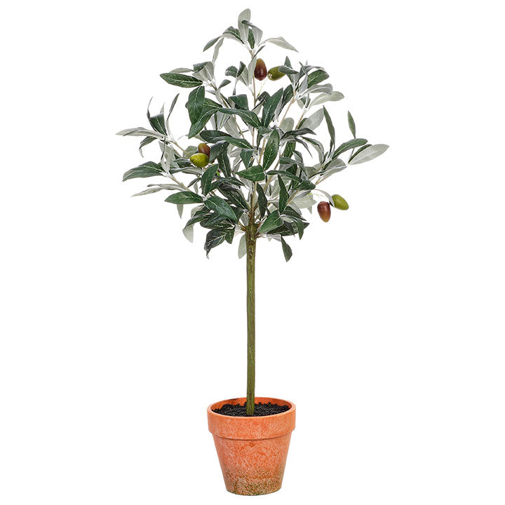 Olive Tree in Terra-Cotta Pot Small