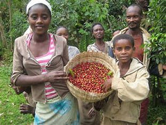 Ethiopian Coffee Farm