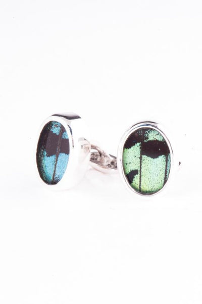 1-Real Butterfly Wings-A-SA-O1-Silver-butterfly-cufflinks-Shimmering-Green-Oval-Chrysiridia-Madagascariensis-Top-wing